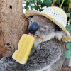 Profile photo of SarapciKoala