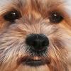 Profile photo of SianAffonso