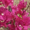 Profile photo of Danuma