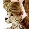 Profile photo of RahmaMM